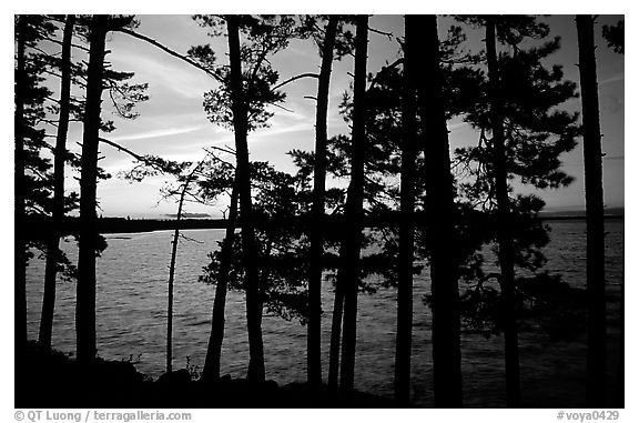 Pine trees silhouettes at sunset, Woodenfrog. Voyageurs National Park (black and white)