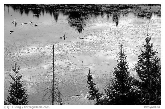 Beaver pond reflections and conifers. Voyageurs National Park (black and white)