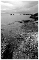 Coastline, Rainy lake. Voyageurs National Park, Minnesota, USA. (black and white)