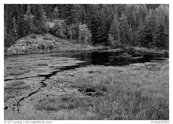 Beaver Pond and forest. Voyageurs National Park (black and white)