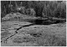 Beaver Pond. Voyageurs National Park, Minnesota, USA. (black and white)
