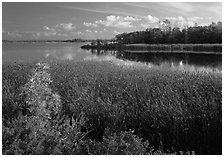 Aquatic grasses and lake, Black Bay. Voyageurs National Park ( black and white)