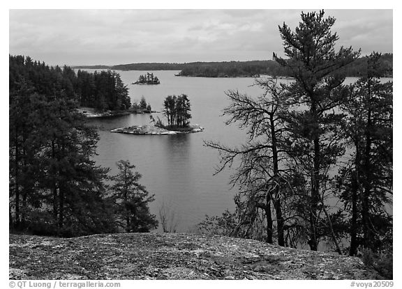 Islet and trees, Anderson Bay. Voyageurs National Park (black and white)