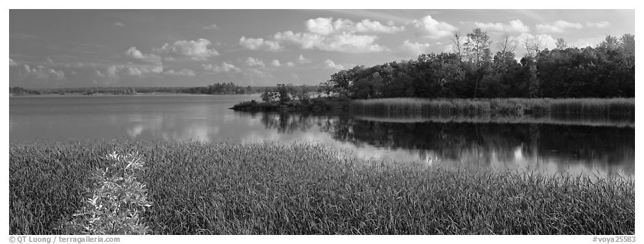 Reeds on lakeshore. Voyageurs National Park (black and white)