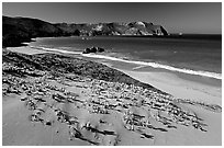 Sand dunes and Cuyler Harbor, afternoon, San Miguel Island. Channel Islands National Park ( black and white)