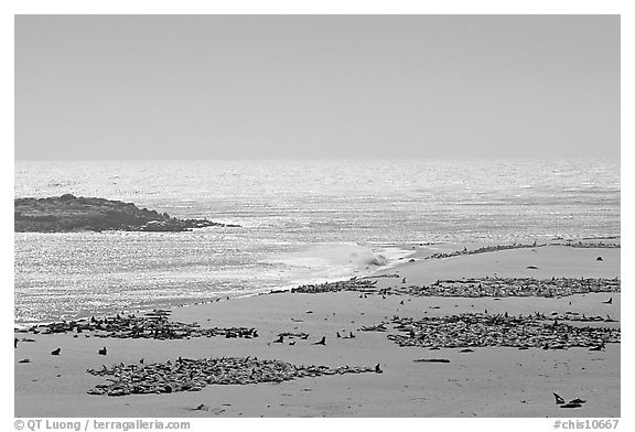 Point Bennett, mid-day, San Miguel Island. Channel Islands National Park (black and white)