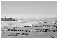 Point Bennett, mid-day, San Miguel Island. Channel Islands National Park, California, USA. (black and white)