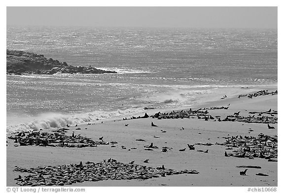 Point Bennett and pinniped colonies, mid-day, San Miguel Island. Channel Islands National Park (black and white)