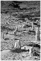 Ghost forest of caliche sand castings , San Miguel Island. Channel Islands National Park, California, USA. (black and white)