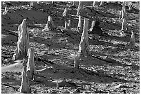 Petrified stumps of caliche, San Miguel Island. Channel Islands National Park, California, USA. (black and white)