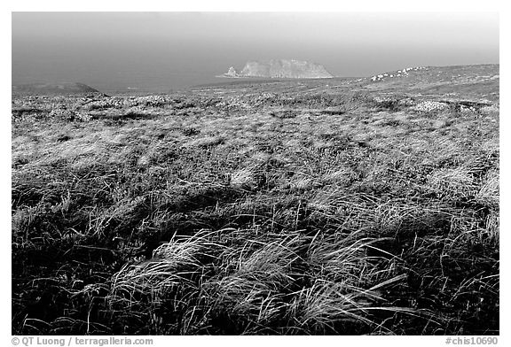 Grasses and Prince Island, San Miguel Island. Channel Islands National Park (black and white)