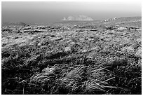 Grasses and Prince Island, San Miguel Island. Channel Islands National Park, California, USA. (black and white)