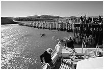 Bechers bay pier, Santa Rosa Island. Channel Islands National Park, California, USA. (black and white)