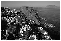Coreopsis and island chain from Inspiration Point, morning, Anacapa. Channel Islands National Park, California, USA. (black and white)