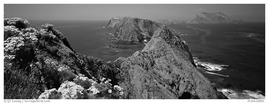 Coreopsis and chain of craggy islands, Anacapa Island. Channel Islands National Park (black and white)