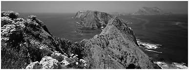 Coreopsis and chain of craggy islands, Anacapa Island. Channel Islands National Park (Panoramic black and white)