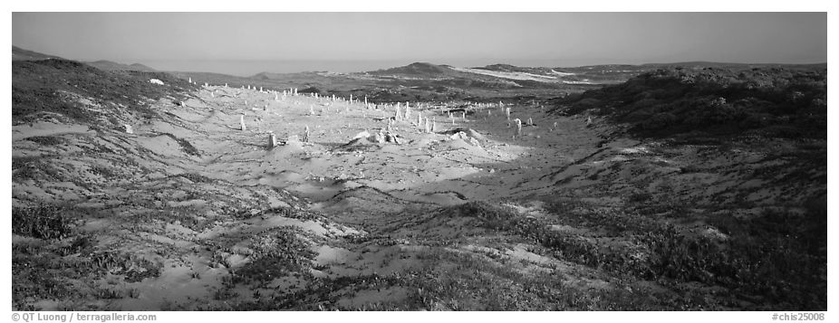 Sandy basin with petrified stumps, San Miguel Island. Channel Islands National Park (black and white)