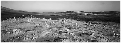 Bizarre ghost forest, San Miguel Island. Channel Islands National Park (Panoramic black and white)