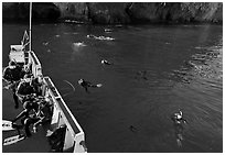 Diving boat and scuba divers in water, Annacapa. Channel Islands National Park, California, USA. (black and white)
