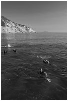 Scuba diving near Santa Cruz Island. Channel Islands National Park, California, USA. (black and white)