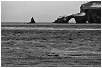 Dolphins and Arch Rock. Channel Islands National Park, California, USA. (black and white)