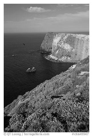 North Bluff, Santa Cruz Island. Channel Islands National Park (black and white)