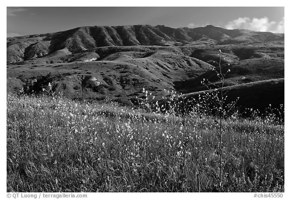 Mustard in bloom and interior hills, Santa Cruz Island. Channel Islands National Park (black and white)