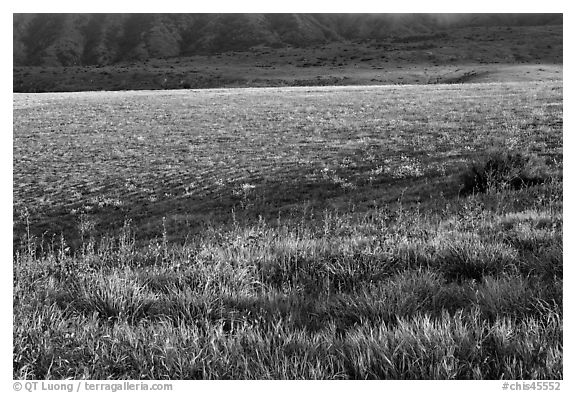 Meadow in spring, Santa Cruz Island. Channel Islands National Park (black and white)