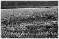Meadow in spring, Santa Cruz Island. Channel Islands National Park ( black and white)