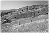 Grasslands, fence and hill ridges, Santa Cruz Island. Channel Islands National Park ( black and white)