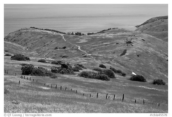 Grasslands in the spring, fence and ocean, Santa Cruz Island. Channel Islands National Park (black and white)