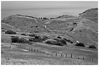 Grasslands in the spring, fence and ocean, Santa Cruz Island. Channel Islands National Park, California, USA. (black and white)