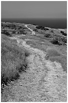 Winding dirt road and ocean, Santa Cruz Island. Channel Islands National Park, California, USA. (black and white)