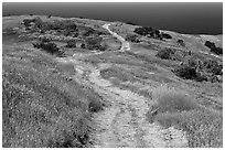 Dirt road through coastal hills, Santa Cruz Island. Channel Islands National Park, California, USA. (black and white)
