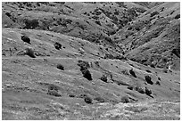 Scorpion Canyon in the spring, Santa Cruz Island. Channel Islands National Park ( black and white)