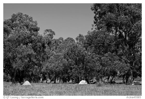 Campground in Scorpion Canyon, Santa Cruz Island. Channel Islands National Park (black and white)