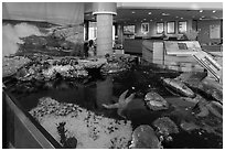 Artificial tidepool inside visitor center. Channel Islands National Park ( black and white)