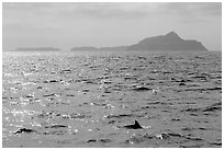 Dolphin fin and Anacapa Islands in background. Channel Islands National Park ( black and white)