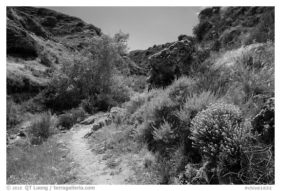 Cherry Canyon Trail, Santa Rosa Island. Channel Islands National Park (black and white)
