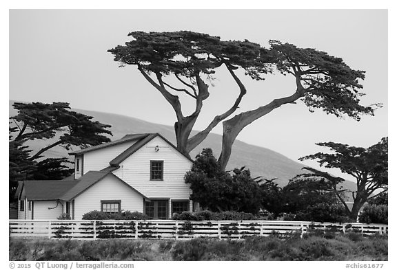 Historic Vail and Vickers main ranch house with cypress trees, Santa Rosa Island. Channel Islands National Park (black and white)