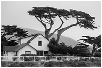 Historic Vail and Vickers main ranch house with cypress trees, Santa Rosa Island. Channel Islands National Park ( black and white)
