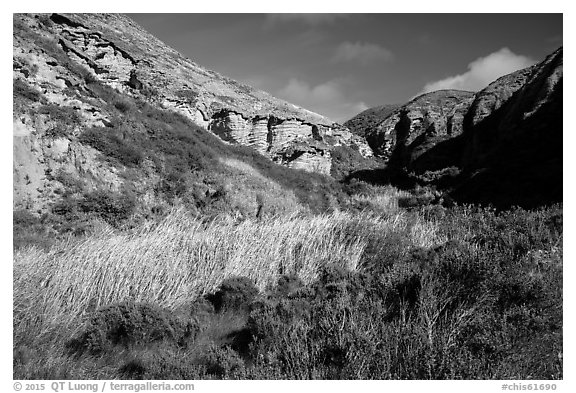 Riparian vegetation and cliffs, Lobo Canyon, Santa Rosa Island. Channel Islands National Park (black and white)