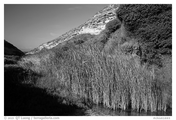 Reeds near the mouth of Lobo Canyon, Santa Rosa Island. Channel Islands National Park (black and white)
