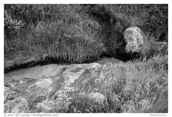 Close-up of stream and vegetation, Lobo Canyon, Santa Rosa Island. Channel Islands National Park (black and white)