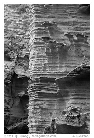 Water-sculptured sandstone wall, Lobo Canyon, Santa Rosa Island. Channel Islands National Park (black and white)