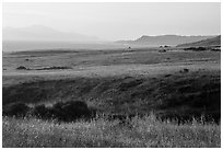 Grasses, Skunk Point, and Santa Cruz Island, sunrise, Santa Rosa Island. Channel Islands National Park ( black and white)