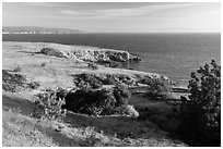 Torrey Pines and coastline near Black Point, Santa Rosa Island. Channel Islands National Park ( black and white)