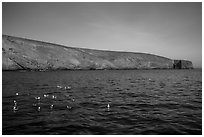 Seabirds and Arch Point, Santa Barbara Island. Channel Islands National Park ( black and white)
