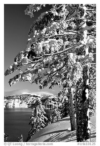 Trees framing  lake in winter. Crater Lake National Park, Oregon, USA.