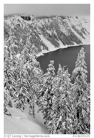 Trees and Lake rim in winter. Crater Lake National Park (black and white)